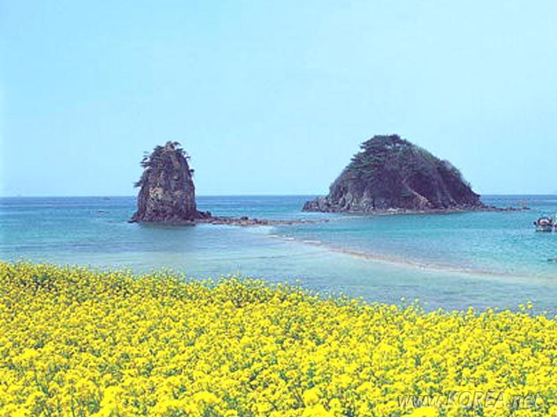 Đảo JeJu- thiên đường núi và biển ở Hàn Quốc