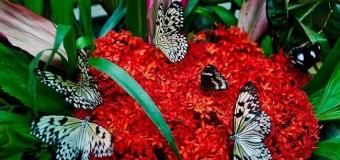Hấp dẫn vườn bướm Phuket