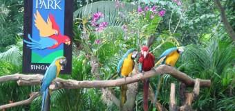 Tham quan vườn chim Jurong ở Singapore