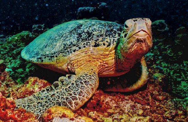 Chú rùa xanh