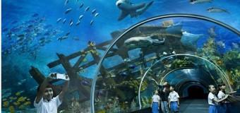 Thăm thủy cung Sentosa lớn nhất thế giới tại Singapore