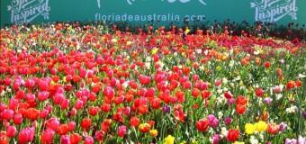 Khám phá lễ hội hoa Australia tháng 9