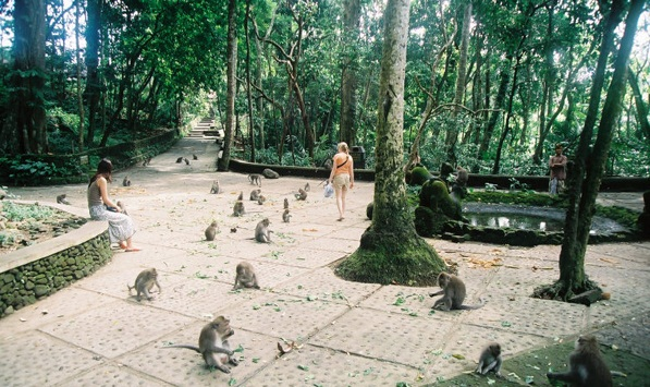rừng khỉ ubud3