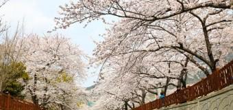 Top 5 lễ hội hàng đầu Hàn Quốc