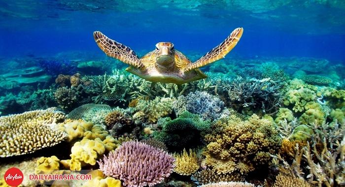 Rặng san hô Great Barrier ReefRặng san hô Great Barrier Reef