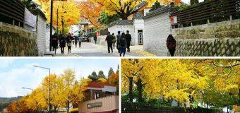 Đi săn ảnh ở 8 địa điểm đẹp nhất Seoul