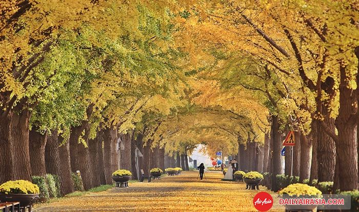 Khám phá 3 con đường đẹp như trong phim của xứ sở Kim Chi