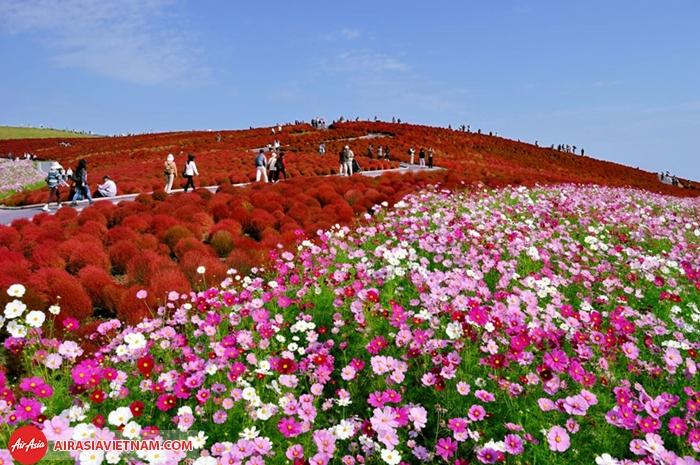 Thiên đường các loài hoa - công viên Hitachi Seaside