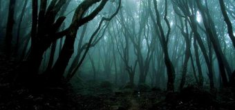 Cảnh tượng ám ảnh bên trong khu rừng Aokigahara ở Nhật Bản
