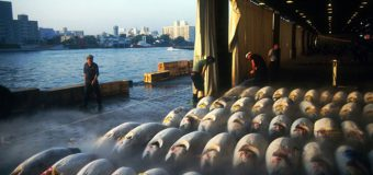 Đến phiên đấu giá cá ngừ lớn nhất thế giới tại Tsukiji