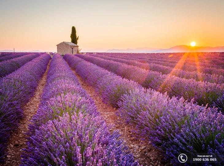 Top 10 cánh đồng hoa tuyệt đẹp thu hút khách du lịch (p1)