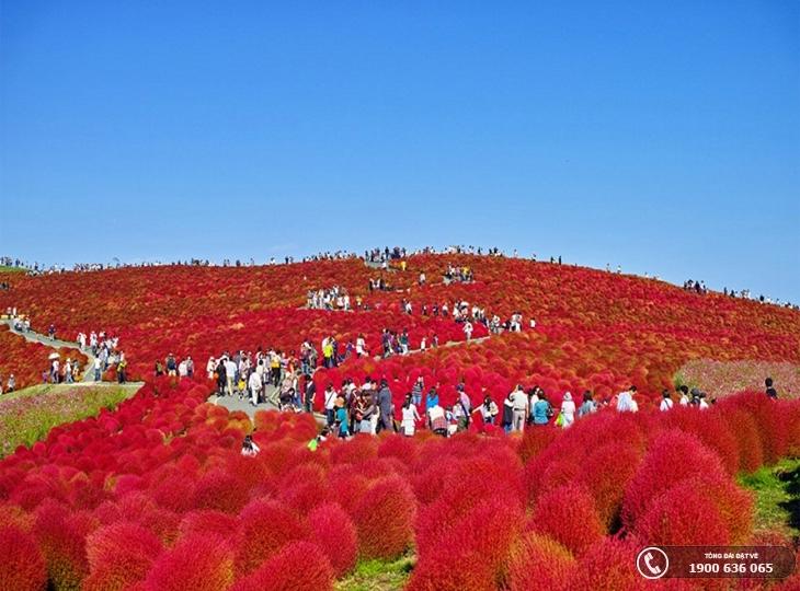 Top 10 cánh đồng hoa tuyệt đẹp thu hút khách du lịch (p2)